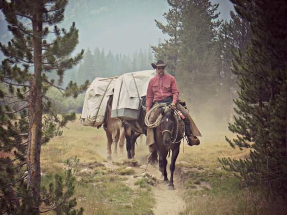 pack mules